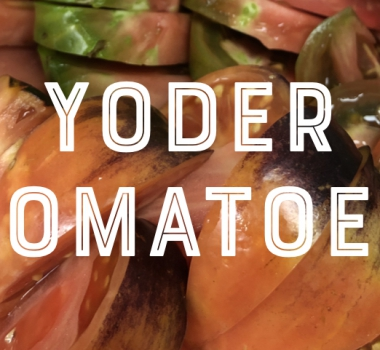 Bill Yoder Talks Heirloom Tomatoes